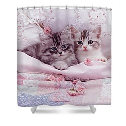 Bedtime Kitties Shower Curtain