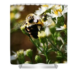 Bee And Spotted Cucumber Beetle On Aster Shower Curtain