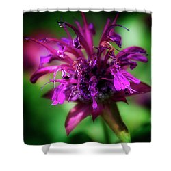 Shower Curtain featuring the photograph Bee Balm Beauty by Chrystal Mimbs