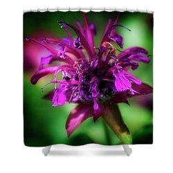 Bee Balm Beauty Shower Curtain by Chrystal Mimbs