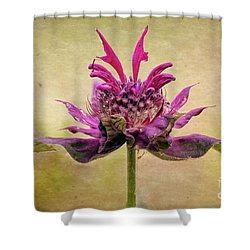 Bee Balm With A Vintage Touch Shower Curtain