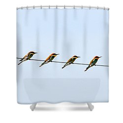 Bee Eaters On A Witre  Shower Curtain