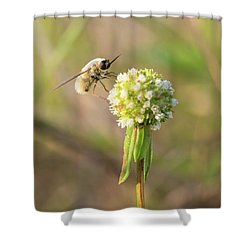 Bee Fly On A Wildflower Shower Curtain by Christopher L Thomley