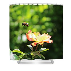 Bee Flying From Peach Petal Rose Shower Curtain