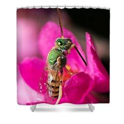 Close Up Macro Of A Green Hornet Shower Curtain