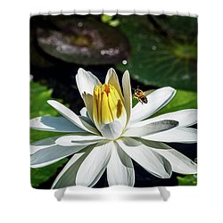 Bee In A Flower Shower Curtain
