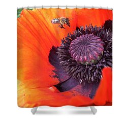 Bee Is Visiting A Poppy Shower Curtain