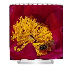 Bee On A Burgundy And Yellow Flower2 Shower Curtain