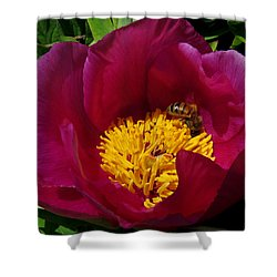 Bee On A Burgundy And Yellow Flower3 Shower Curtain