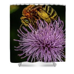Shower Curtain featuring the photograph Bee On A Thistle by Paul Freidlund