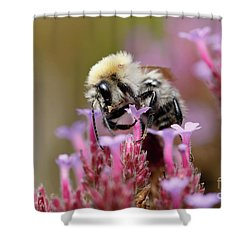 Shower Curtain featuring the photograph Bee On A Verbena Bonariensis by Nick Biemans