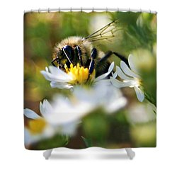 Bee On Aster Shower Curtain