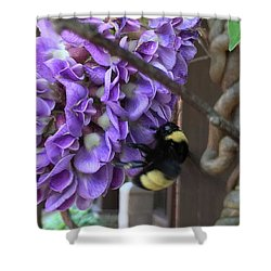 Bee On Native Wisteria Shower Curtain