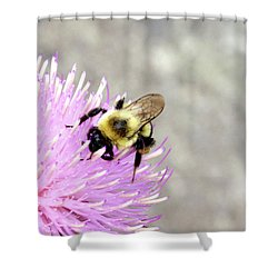 Shower Curtain featuring the photograph Bee On Pink Bull Thistle by Meta Gatschenberger