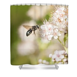 Bee On Pink Flowers Shower Curtain