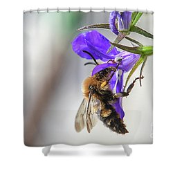 Bee On Purple Flower Shower Curtain