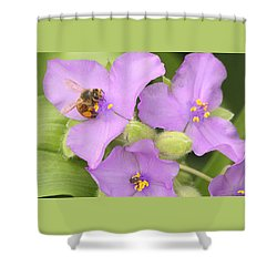 Shower Curtain featuring the photograph Bee On Purple Spiderwort by Sheila Brown