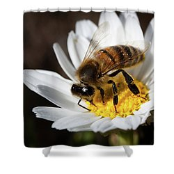 Bee On The Flower Shower Curtain by Bruno Spagnolo