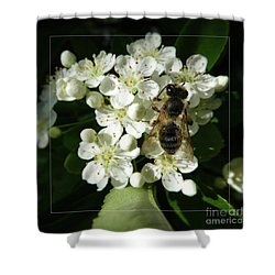 Bee On White Flowers 2 Shower Curtain by Jean Bernard Roussilhe