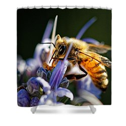 Bee Visits Rosemary  Shower Curtain