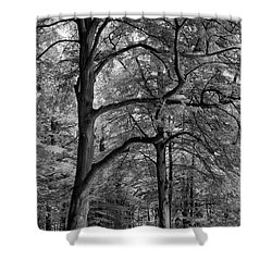 Beech Forest - 365-222 Shower Curtain by Inge Riis McDonald