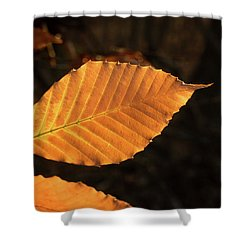 Beech Leaves In Afternoon Sun Shower Curtain