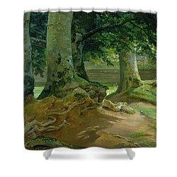 Beech Trees In Frederiksdal Near Copenhagen Shower Curtain by Christian Ernst Bernhard Morgenstern