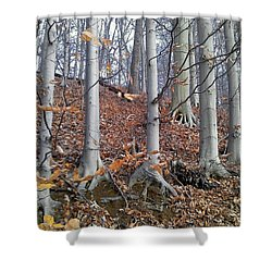 Beech Trees Shower Curtain