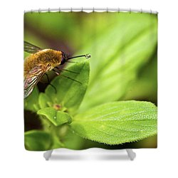 Beefly Shower Curtain by Christopher Holmes
