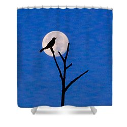 Before Dawn Shower Curtain