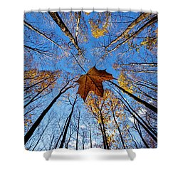 Shower Curtain featuring the photograph Before The First Snow by Mircea Costina Photography