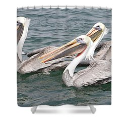Begging For Food Shower Curtain by Shoal Hollingsworth