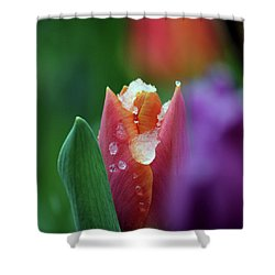 Shower Curtain featuring the photograph Beginning Of Spring by Silke Brubaker