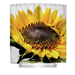 Beginning To Bloom Shower Curtain