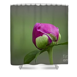 Simple Beginnings Shower Curtain