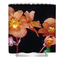 Begonia Buddies Shower Curtain by Laurie Paci