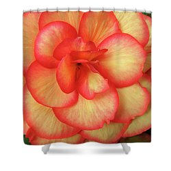 Begonia No. 1 Shower Curtain