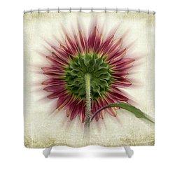 Behind The Sunflower Shower Curtain