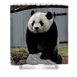 Bei Bei Panda Shower Curtain by Diane Lent