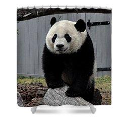 Bei Bei Panda Shower Curtain