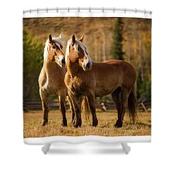 Shower Curtain featuring the photograph Belgian Draft Horses by Sharon Jones