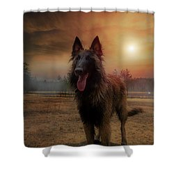 Belgian Shepherd Shower Curtain by Rose-Marie Karlsen