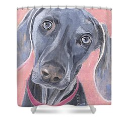 Shower Curtain featuring the painting Bella by Jamie Frier