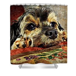 Bella's Thanksgiving Shower Curtain by Kathy M Krause