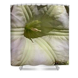Shower Curtain featuring the photograph Belle Of The Ball by Betty Northcutt