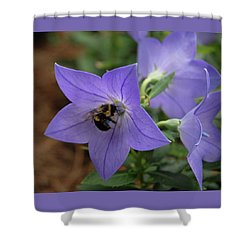 Shower Curtain featuring the photograph Bellflower And Bee  by Marie Hicks