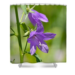 Bellflower Visitor  Shower Curtain by Lyle Crump