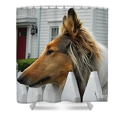 Bellingham Collie Shower Curtain