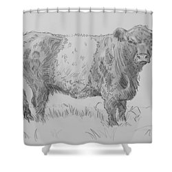 Belted Galloway Cow Pencil Drawing Shower Curtain