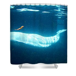 Beluga Shower Curtain